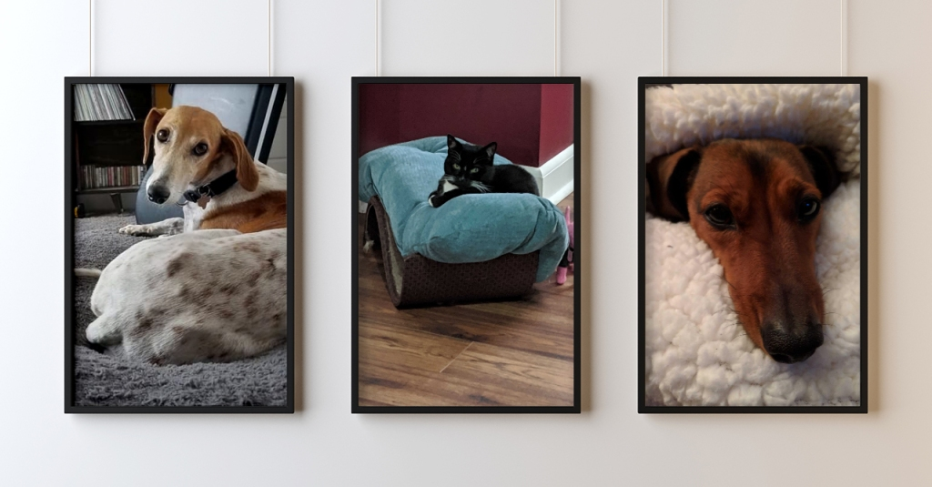 A gallery wall with three portrait-ratio framed images of Alley pets - a white and brown greyhoundish dog sitting on a grey bed, a black and white cat on a blue pillow, and the head of a daschsund snuggling between the layers of a white fleece blanket